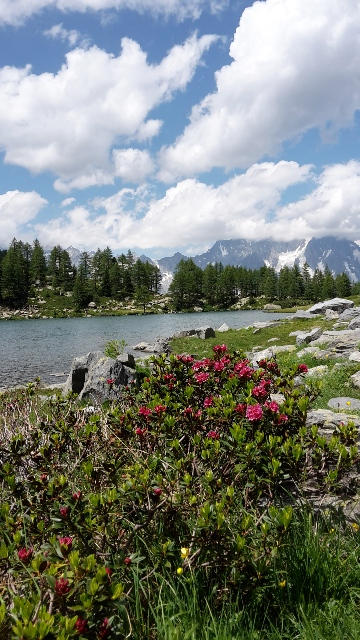 Le Rhododendron lac d'Arpy